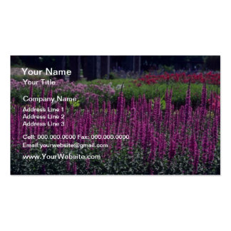 Pink Purple Lossestri, (Lythrum Salicaria) flowers Double-Sided Standard Business Cards (Pack Of 100)