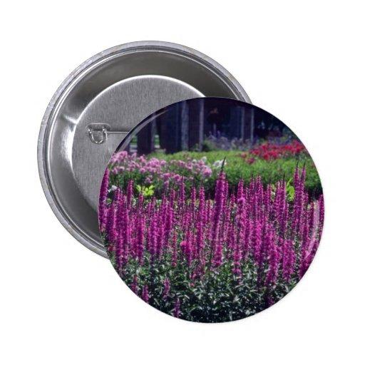 Pink Purple Lossestri, (Lythrum Salicaria) flowers 2 Inch Round Button