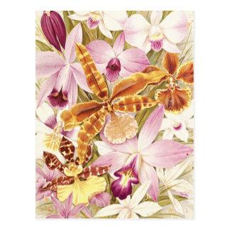 Pink Purple Orchid Flower Blooms Vintage Floral Postcard
