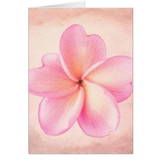 Pink Purple Plumeria Flower Pink Background Greeting Card