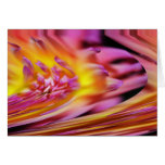 Pink Purple Violet Yellow Abstract Wave Design Cards