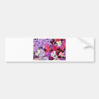 Pink purple white Sweet pea flowers in bloom Bumper Sticker
