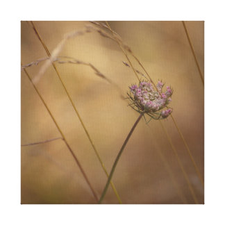 Pink Queen Anne's Lace Vintage Style Photo Canvas Print