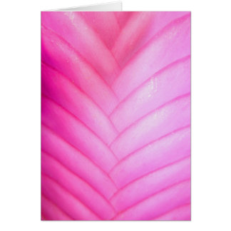 Pink Quill Bromeliad Card
