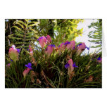 Pink Quill Bromeliad Greeting Card