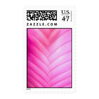 Pink Quill Bromeliad Postage