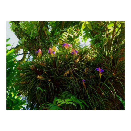 Pink Quill Bromeliads Poster