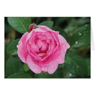 Pink Raindrops Valentine Greeting Cards