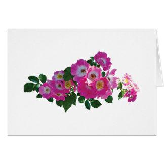 Pink Rambler Rose Greeting Card
