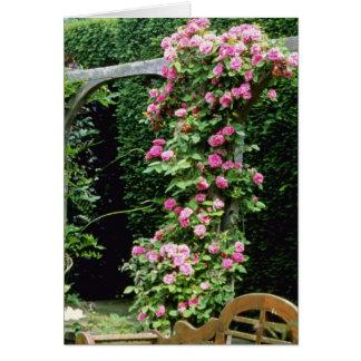 Pink Rambler Rose Francoise Juranville Over Pergol Greeting Card