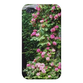 Pink Rambler Rose Francoise Juranville Over Pergol iPhone 4/4S Cases