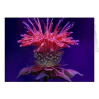 Pink Raspberry Wine Bee Balm Flower on Purple Card