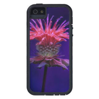 Pink Raspberry Wine Bee Balm Flower on Purple Case For iPhone SE/5/5s