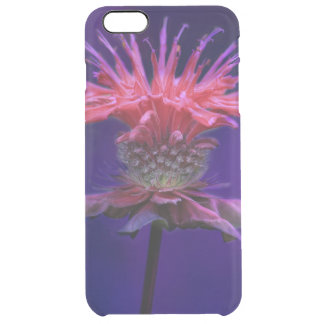 Pink Raspberry Wine Bee Balm Flower on Purple Clear iPhone 6 Plus Case