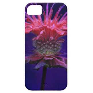 Pink Raspberry Wine Bee Balm Flower on Purple iPhone SE/5/5s Case