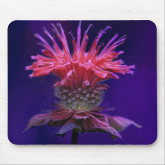 Pink Raspberry Wine Bee Balm Flower on Purple Mouse Pad