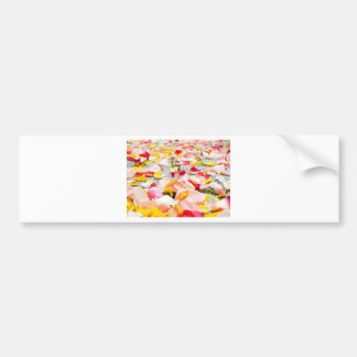 Pink Red and Yellow Rose Petals Bumper Sticker