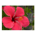 Pink & Red Hibiscus Post Cards