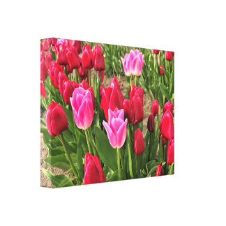 Pink & Red Tulips Canvas Print