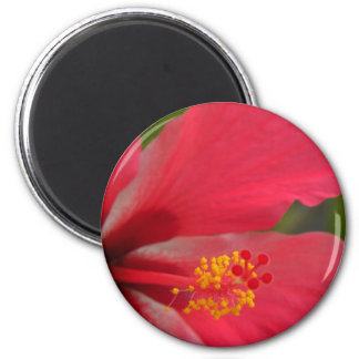 Pink, Red, Yellow, & White Hibiscus 2 Inch Round Magnet