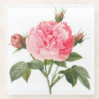 Pink Redoute Rose Flowers Glass Coaster