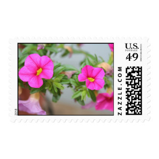 pink reflections postage