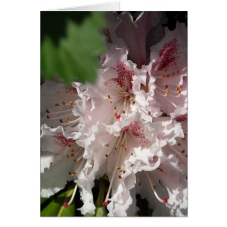 Pink Rhododendron 2 Card