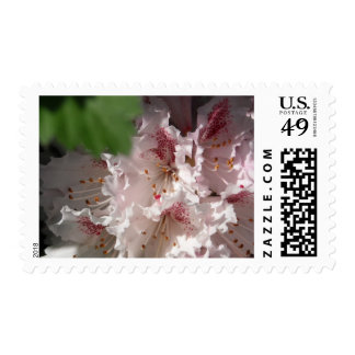 Pink Rhododendron 2 Postage