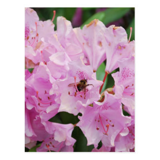 Pink Rhododendron and Bee Postcard