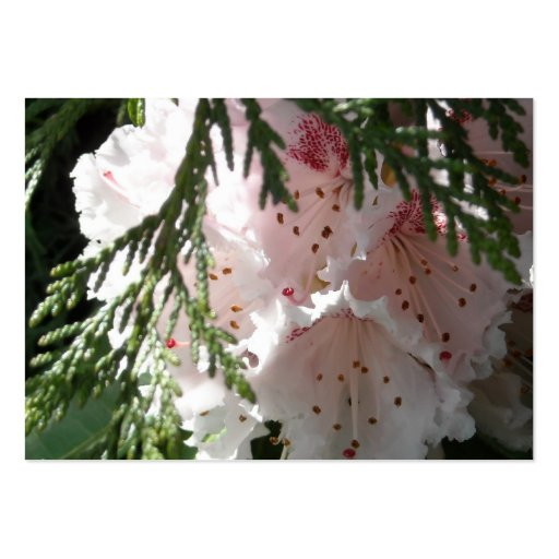 Pink Rhododendron and Cedar Business Card Template