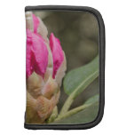 pink rhododendron bud.jpg folio planners