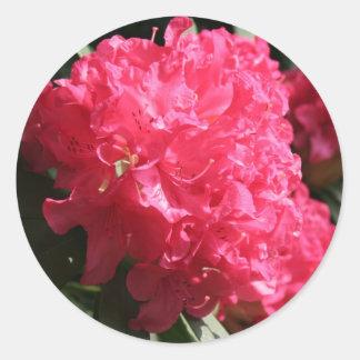 Pink Rhododendron Classic Round Sticker