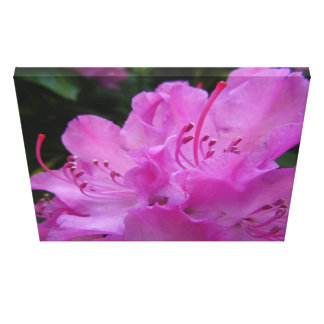 Pink Rhododendron flower Canvas Print