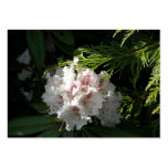 Pink Rhododendron Flower in Cedar Contrast Black Business Card Template