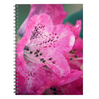 Pink Rhododendron Flower Note Books