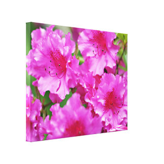 Pink Rhododendron Flowers Canvas Prints