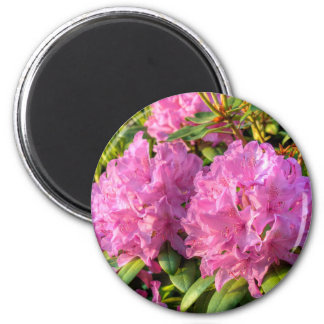 Pink Rhododendron II Refrigerator Magnet