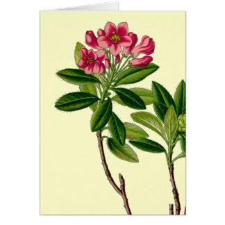 Pink rhododendron illustration stationery note card