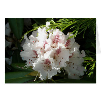 Pink Rhododendron Photo Card
