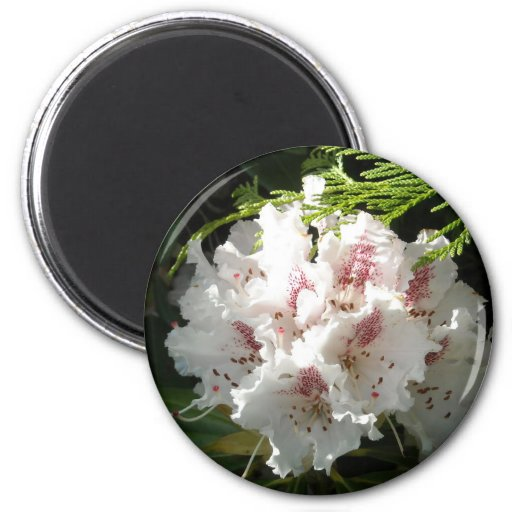 Pink Rhododendron Photo Fridge Magnet