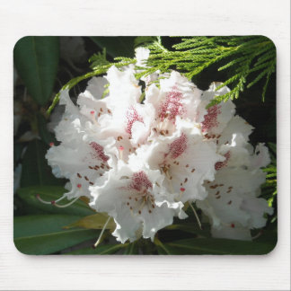 Pink Rhododendron Photo Mouse Pad