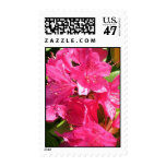 Pink Rhododendron Postage
