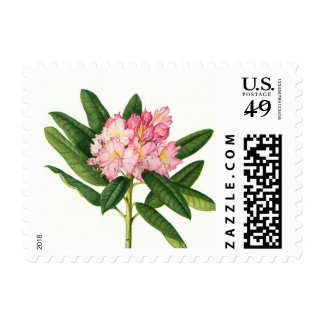 Pink Rhododendron - Postage
