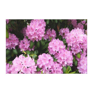 Pink Rhododendrons Wrapped Canvas Print