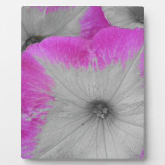Pink Rimmed Petunia Plaque