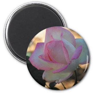 Pink Rimmed Rose Magnet