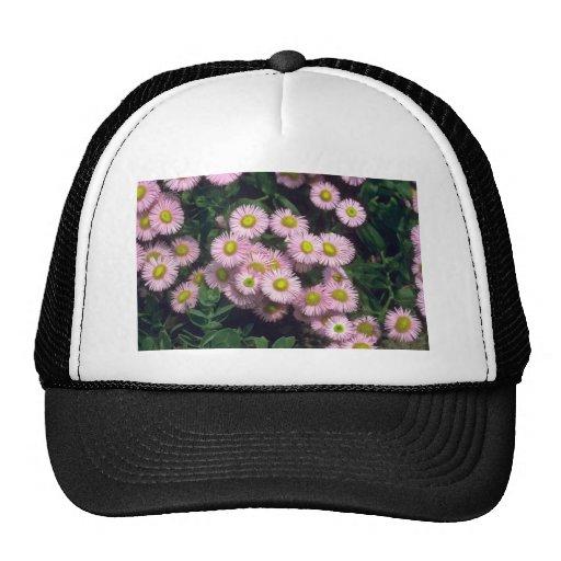 Pink Rosa Jewel, (Erigeron) flowers Hats