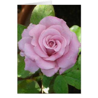 Pink Rose1_2 Card