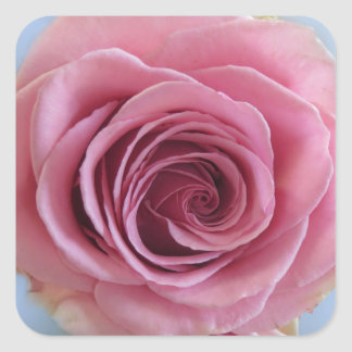 Pink Rose 1a Square Sticker