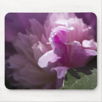 pink-rose-2012-05-20 mouse pad